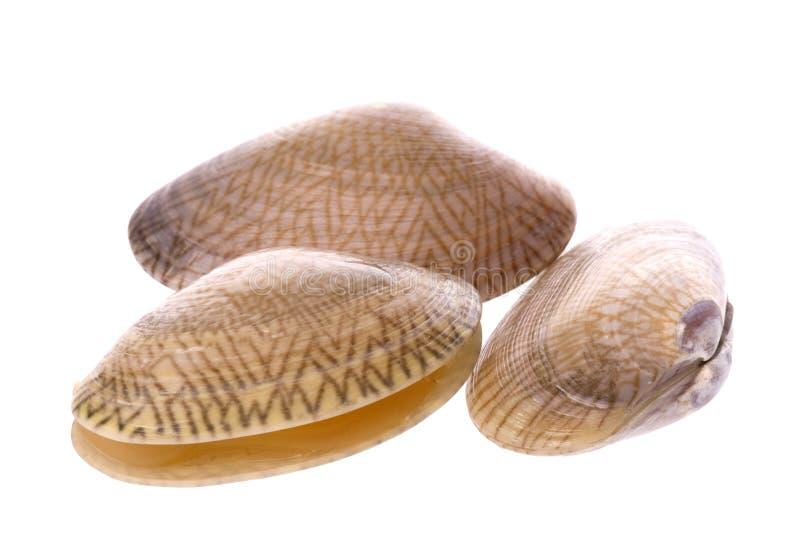 蛤蜊可食的活宏指令 图库摄影