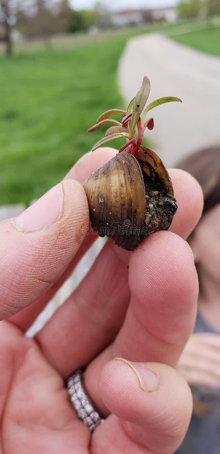 蛤蜊的植物 免版税库存图片
