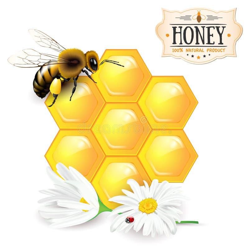 蜂、蜂窝、雏菊和蜂蜜标签 向量例证