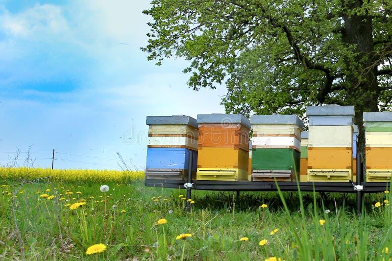 蜂五颜六色的蜂房在草甸 图库摄影