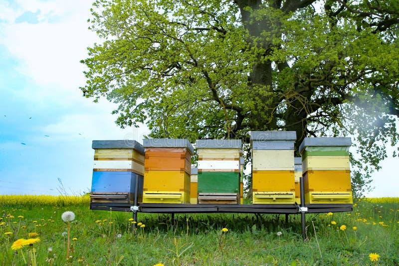 蜂五颜六色的蜂房在草甸 免版税库存图片