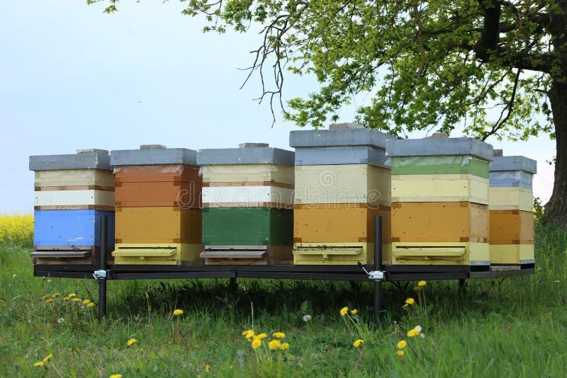 蜂五颜六色的蜂房在草甸 免版税图库摄影