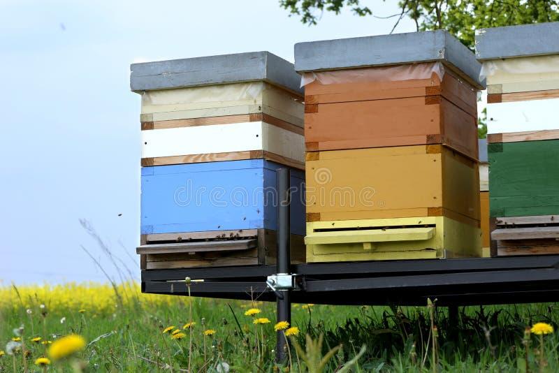 蜂五颜六色的蜂房在草甸 免版税库存照片