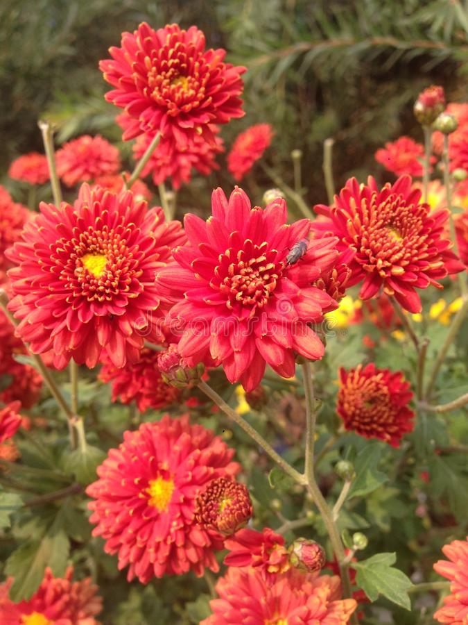 蜂从花收集蜂蜜 免版税库存照片