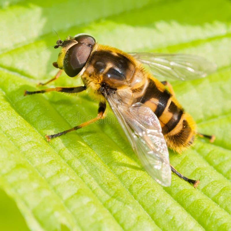 蜂休息 免版税图库摄影