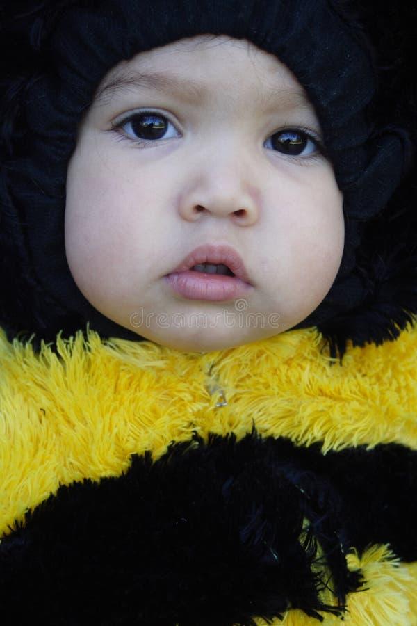 蜂关闭加工好的女孩喜欢  免版税库存照片