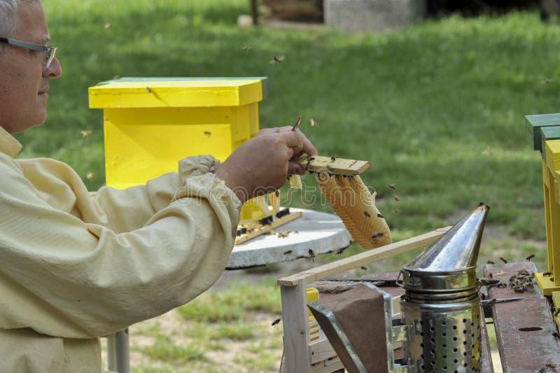蜂农与联接的蜂房一起使用 免版税库存照片