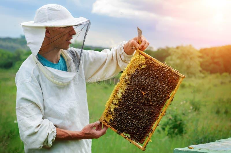 蜂农与蜂一起使用在蜂房附近 养蜂 库存图片