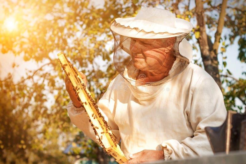 蜂农与蜂一起使用在蜂房附近 养蜂 免版税库存照片