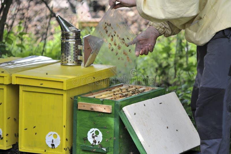 蜂农与蜂一起使用quen cels 免版税库存照片