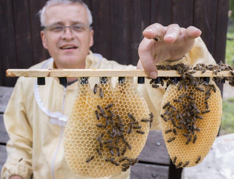 蜂农与蜂一起使用quen cels 免版税图库摄影