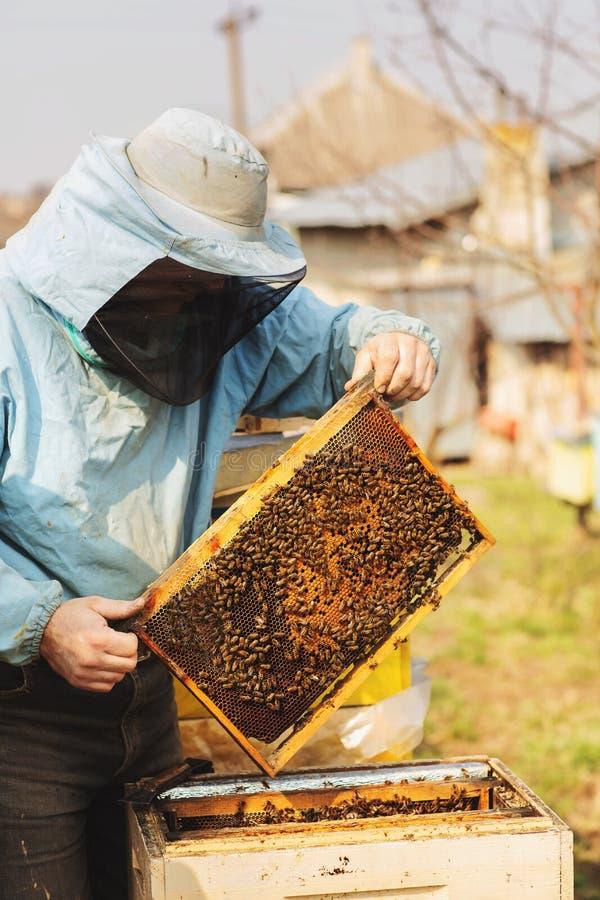 蜂农与蜂和蜂箱一起使用在蜂房 库存照片