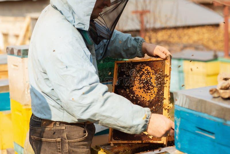 蜂农与蜂和蜂箱一起使用在蜂房 图库摄影