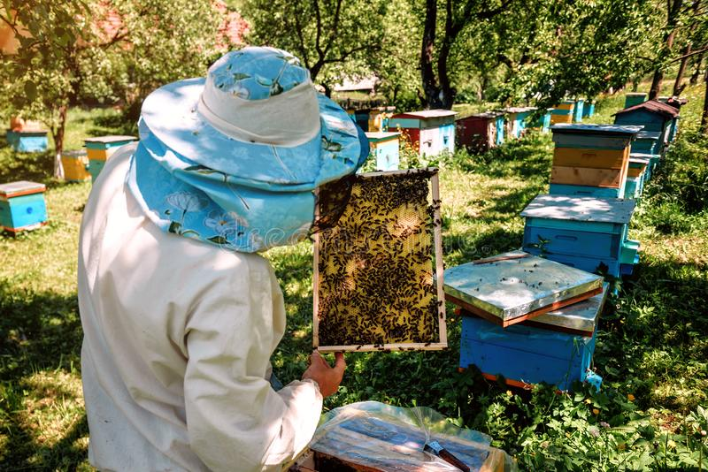 蜂农与蜂窝的举行框架 免版税库存图片