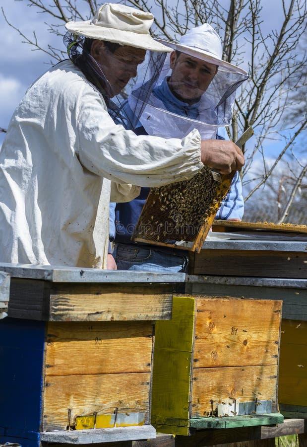 蜂农与蜂箱一起使用 库存图片