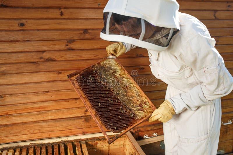 蜂农从蜂房拔出与蜂窝的一个木制框架 收集蜂蜜 养蜂业概念 免版税库存图片