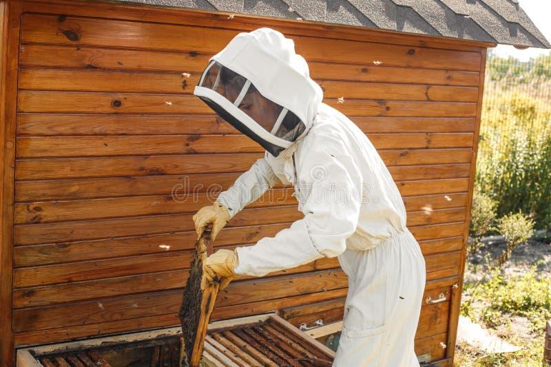 蜂农从蜂房拔出与蜂窝的一个木制框架 收集蜂蜜 养蜂业概念 免版税图库摄影