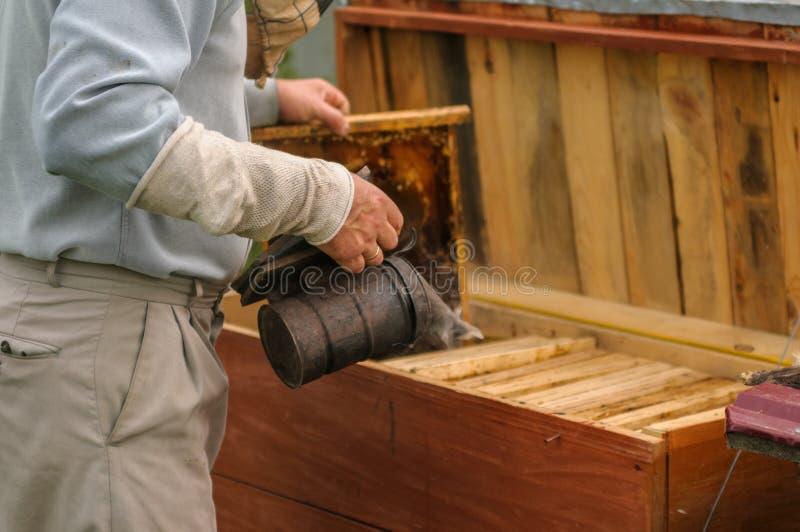 蜂农从蜂房里面拉框架 递办公室运作的工作场所 工作在家 库存图片