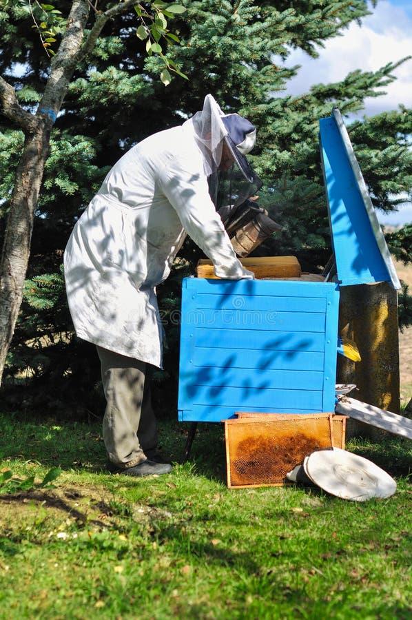 蜂农准备从蜂箱的收获蜂蜜 图库摄影