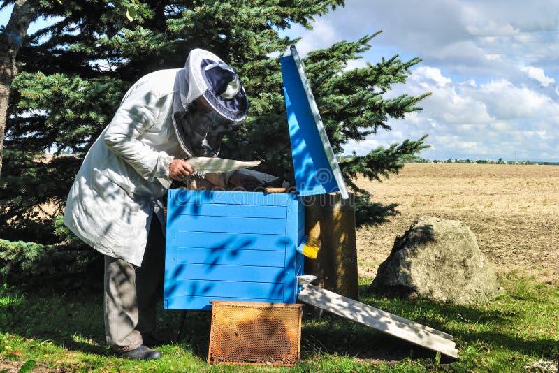 蜂农准备从蜂箱的收获蜂蜜 免版税库存照片