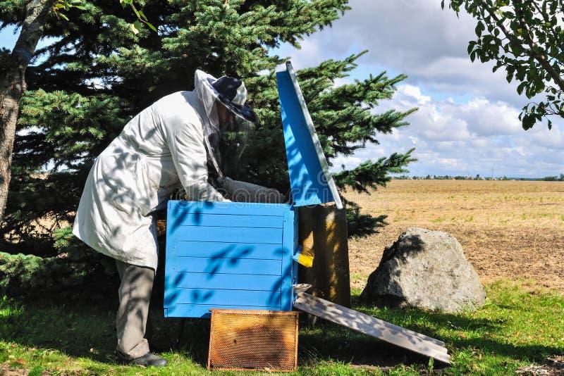 蜂农准备从蜂箱的收获蜂蜜 库存图片