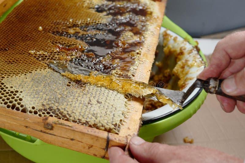 蜂农切除了刀子蜡 库存图片