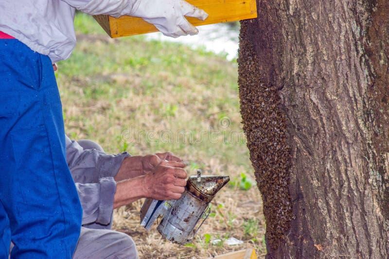蜂农剪影很好运作 免版税库存照片