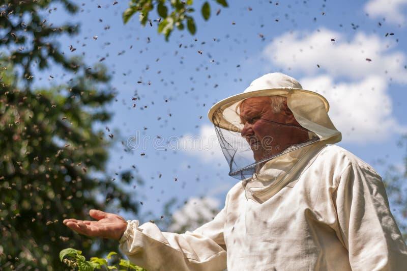 蜂农和蜂群集,蜂房蜂箱蜂蜜 免版税库存照片