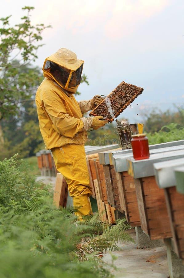 蜂农在与蜂窝一起使用 免版税库存照片