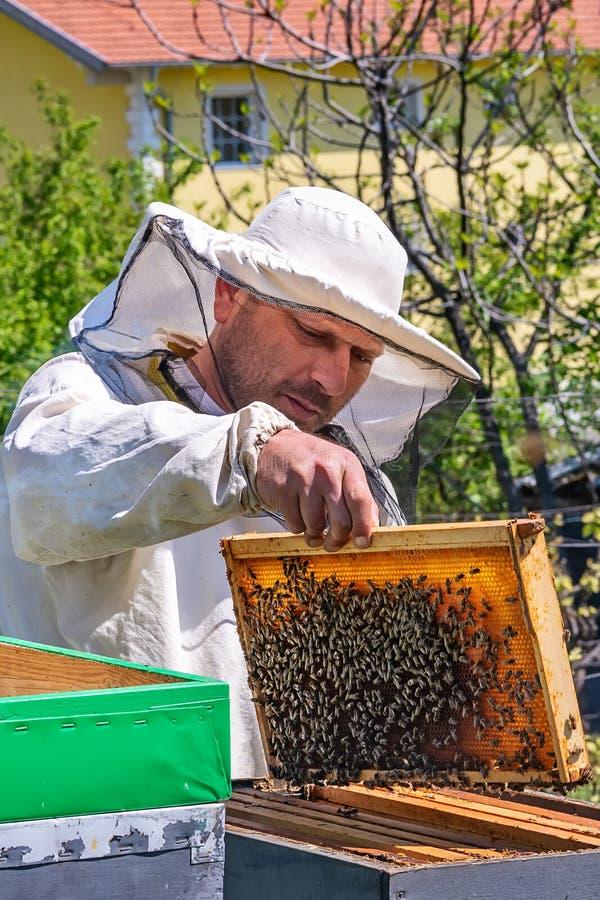 蜂农在工作 在蜂房外面的蜂老板举的架子 蜂农保存蜂 免版税库存图片