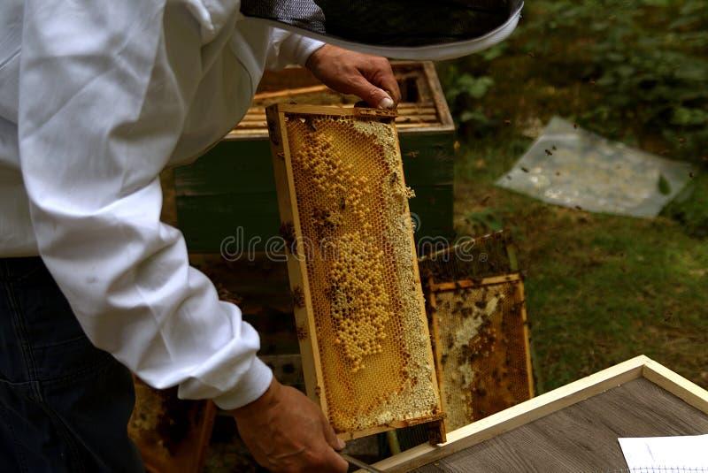 蜂农在工作 库存照片