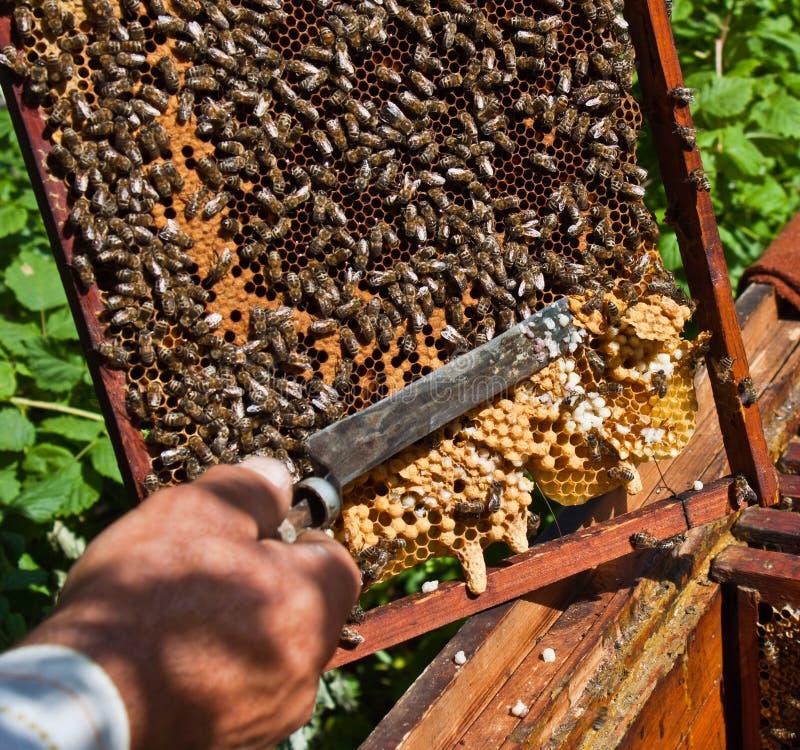 蜂农在工作 免版税库存图片