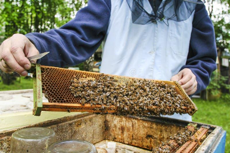 蜂农在工作 免版税库存照片