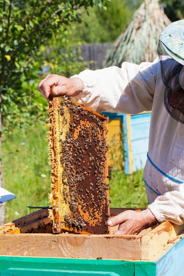 蜂农在手中拿着一个框架用蜂蜜 库存照片