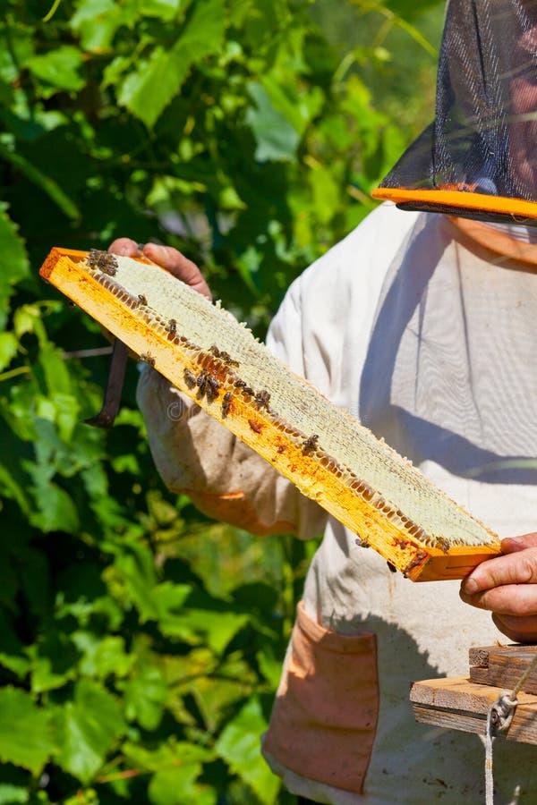 图片包括有蜂窝,食物,蜜蜂,携带用床盖,,并且-47308138名字搞笑大象图片