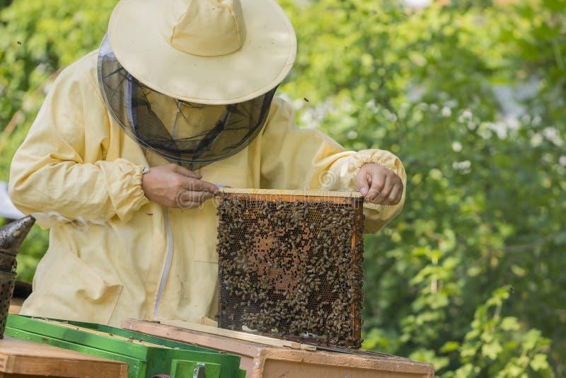 蜂农在蜂房工作-增加框架 库存照片
