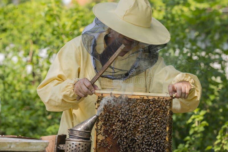 蜂农在蜂房工作-增加框架 免版税图库摄影