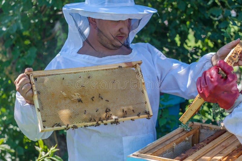 蜂农在他的手上拿着一个蜂箱框架 图库摄影
