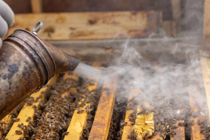 蜂农对待蜂房与抽烟在工作选择聚焦前镇定蜂 库存照片