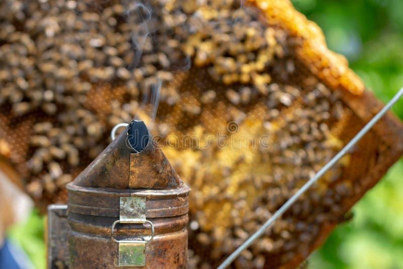 蜂农对待蜂房与抽烟在工作选择聚焦前镇定蜂 库存图片
