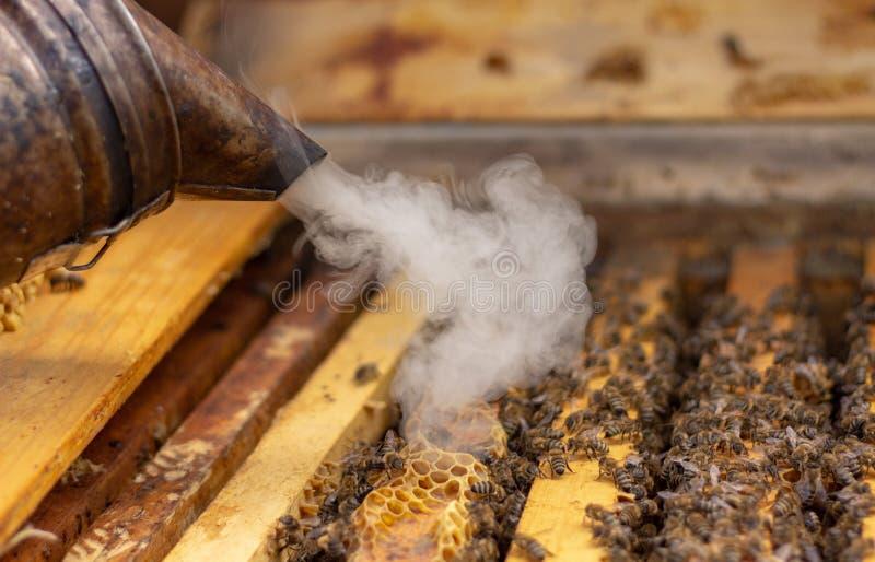 蜂农对待蜂房与抽烟在工作选择聚焦前镇定蜂 免版税库存照片