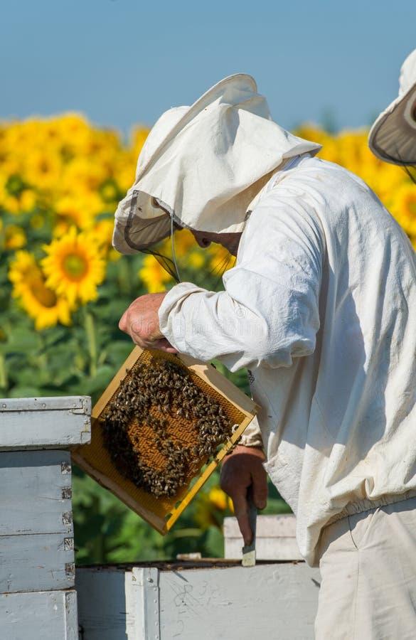 蜂农工作 库存图片
