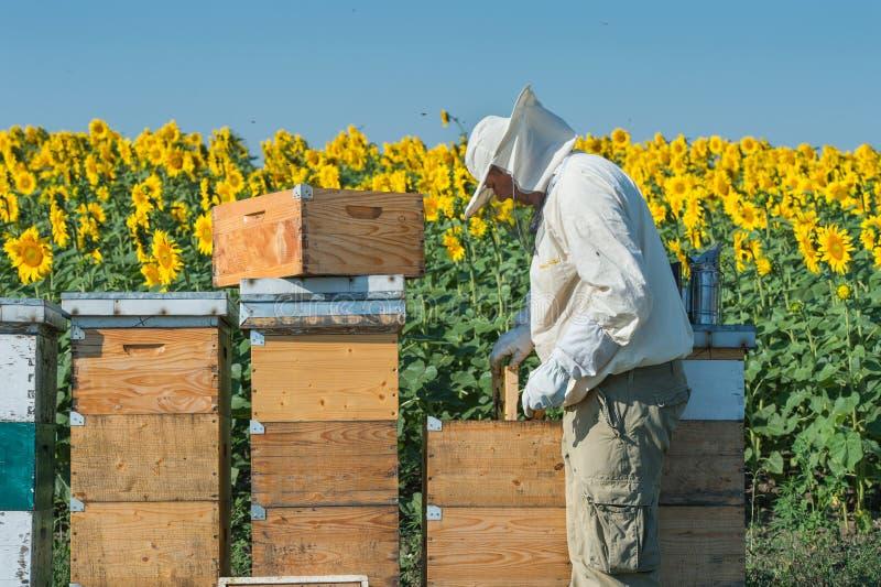 蜂农工作 免版税图库摄影