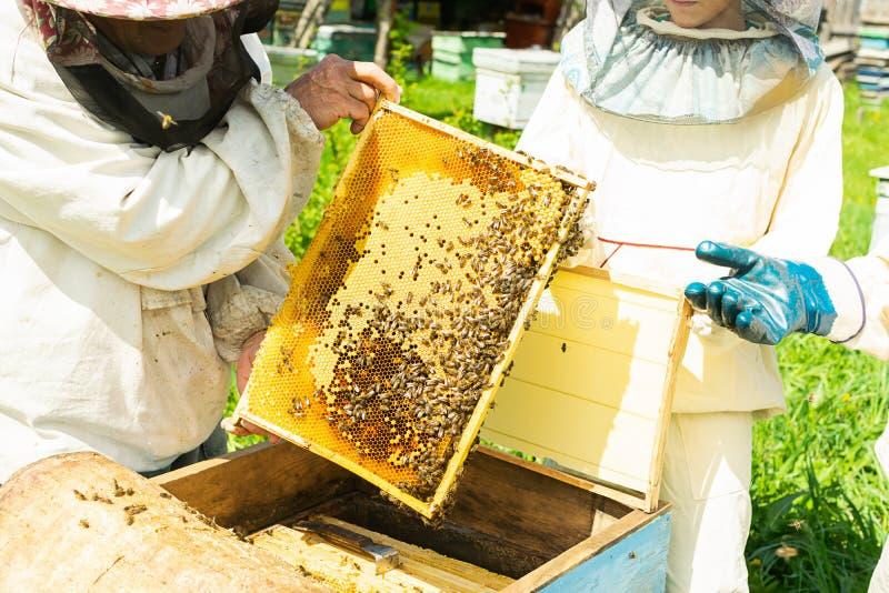 蜂农拿着一个框架用蜂蜜和蜂 在蜂房的养蜂业工作 r 免版税库存图片