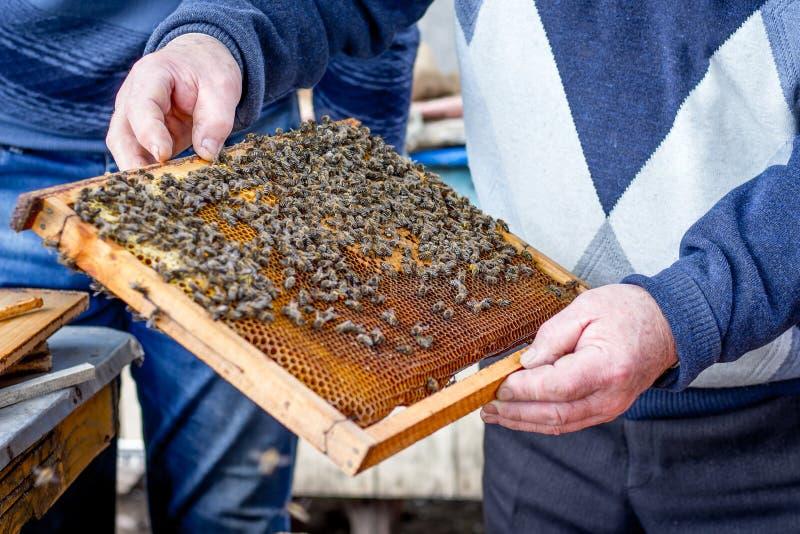 蜂农拿着与蜂的框架在他的hands_ 免版税库存图片