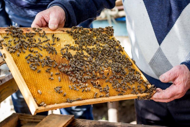 蜂农拿着与蜂的蜂窝框架在他的手上 关心  库存照片