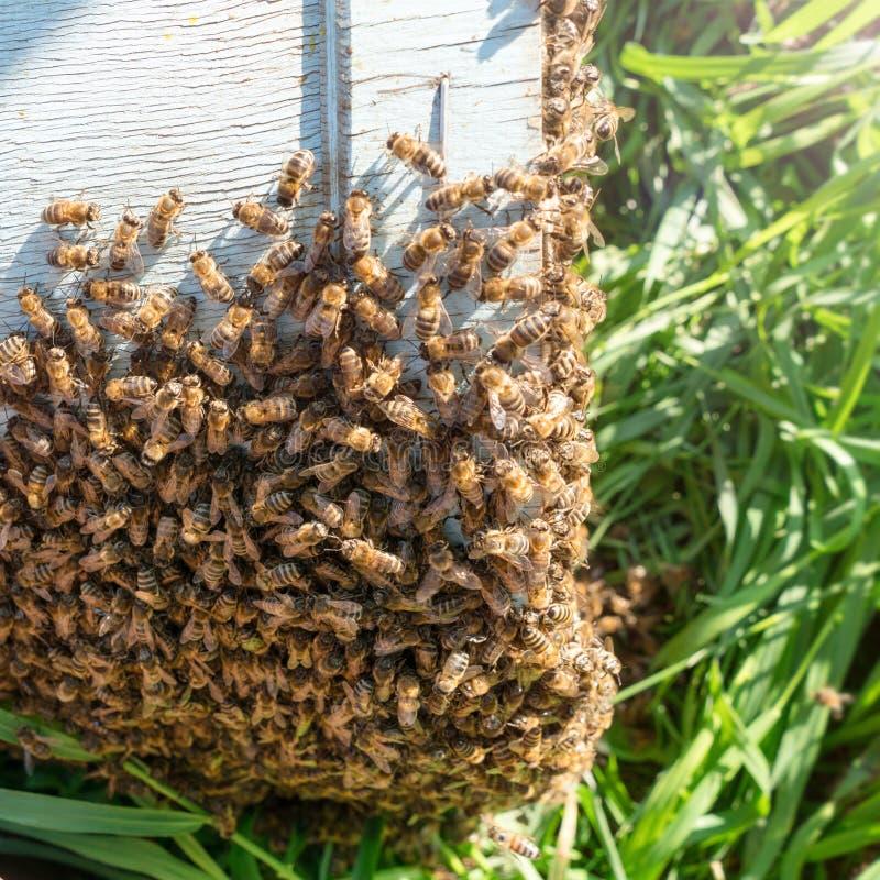 蜂农捉住了蜂 免版税图库摄影