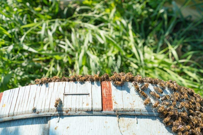 蜂农捉住了蜂 库存照片