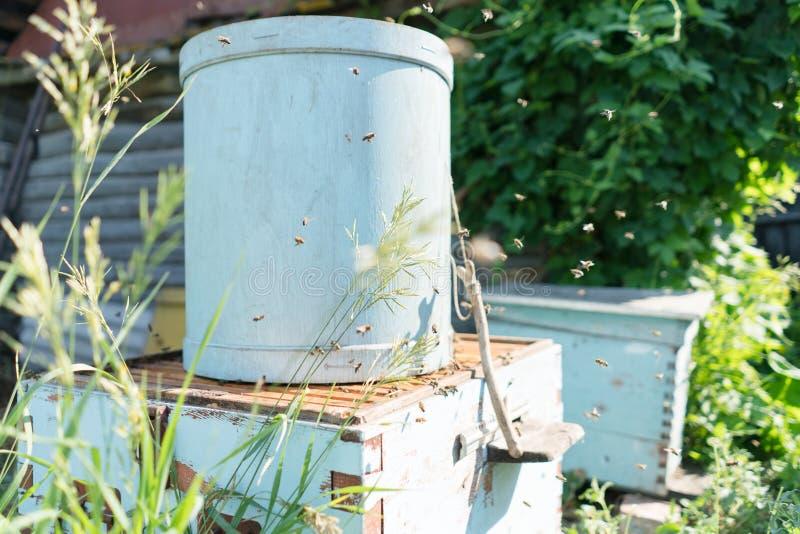 蜂农捉住了蜂 免版税库存照片