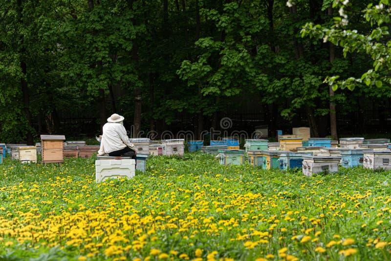 蜂农是休息和观看蜂 免版税图库摄影